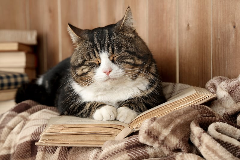 Hypothyroidism in cats in Southeast Memphis