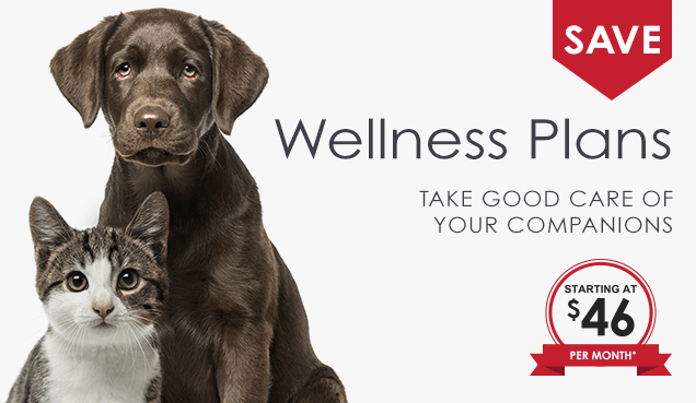 Pet Wellness Plans in Memphis, Tennessee