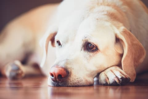 Does your dog have an upset stomach? Southeast Memphis vets