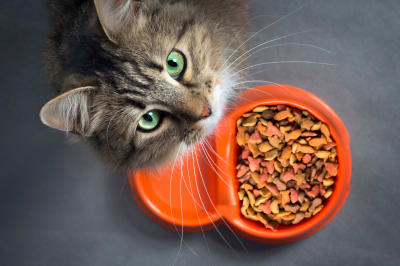 Why won't my cat or kitten eat? Southeast Memphis vets